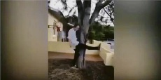McPherson filmed kicking the quokka. Harrison McPherson on social media.