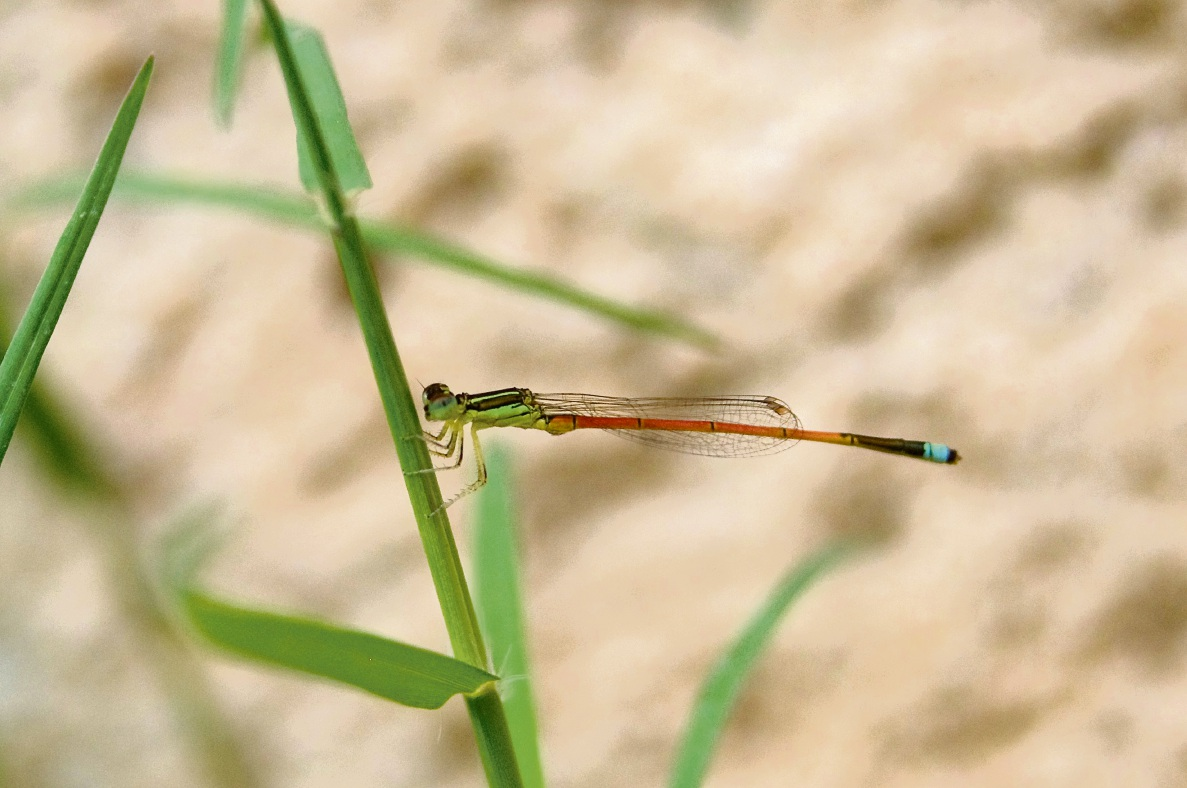 Colourful Damselfly by Callum Innes (15)