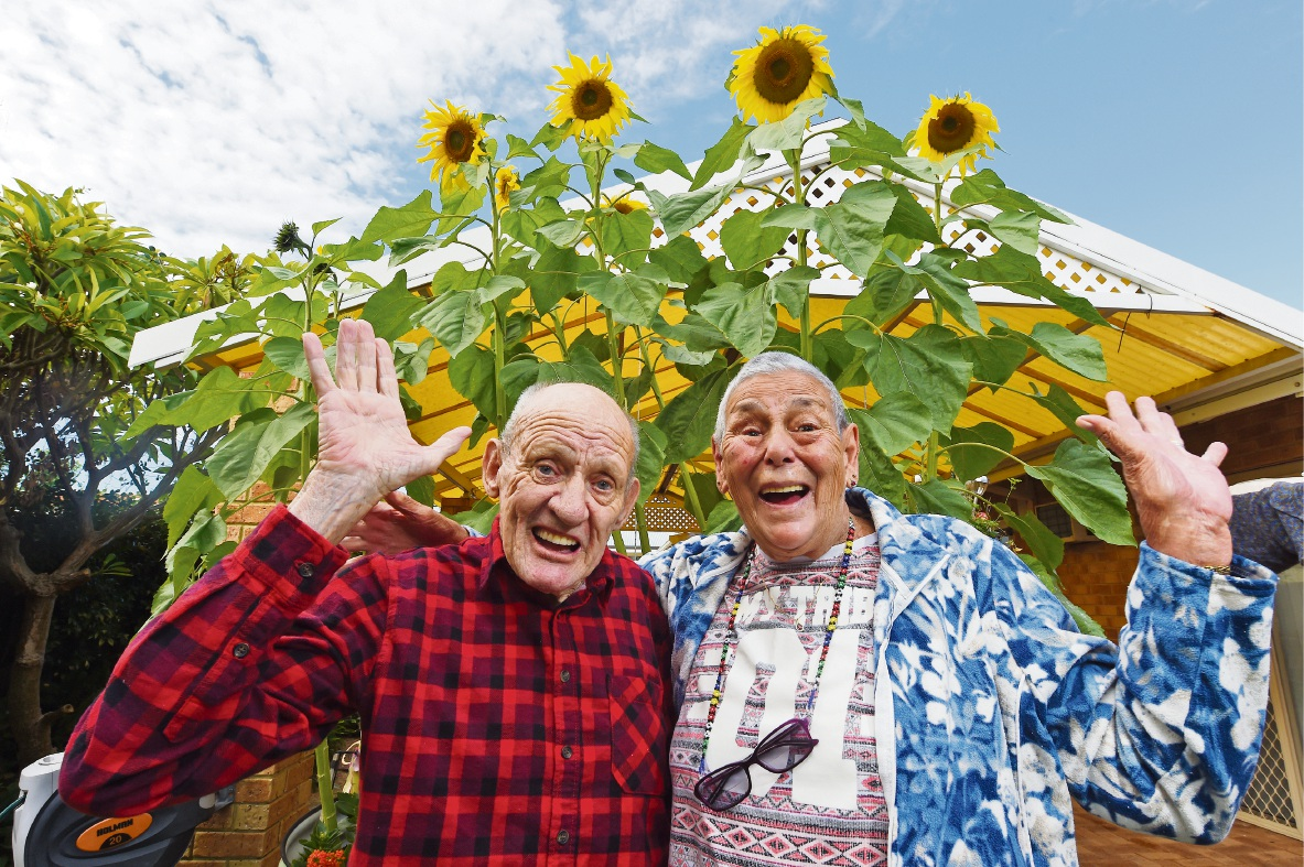 Robert and Phyllis Bradford with their sunflowers. Picture: Jon Hewson d469929