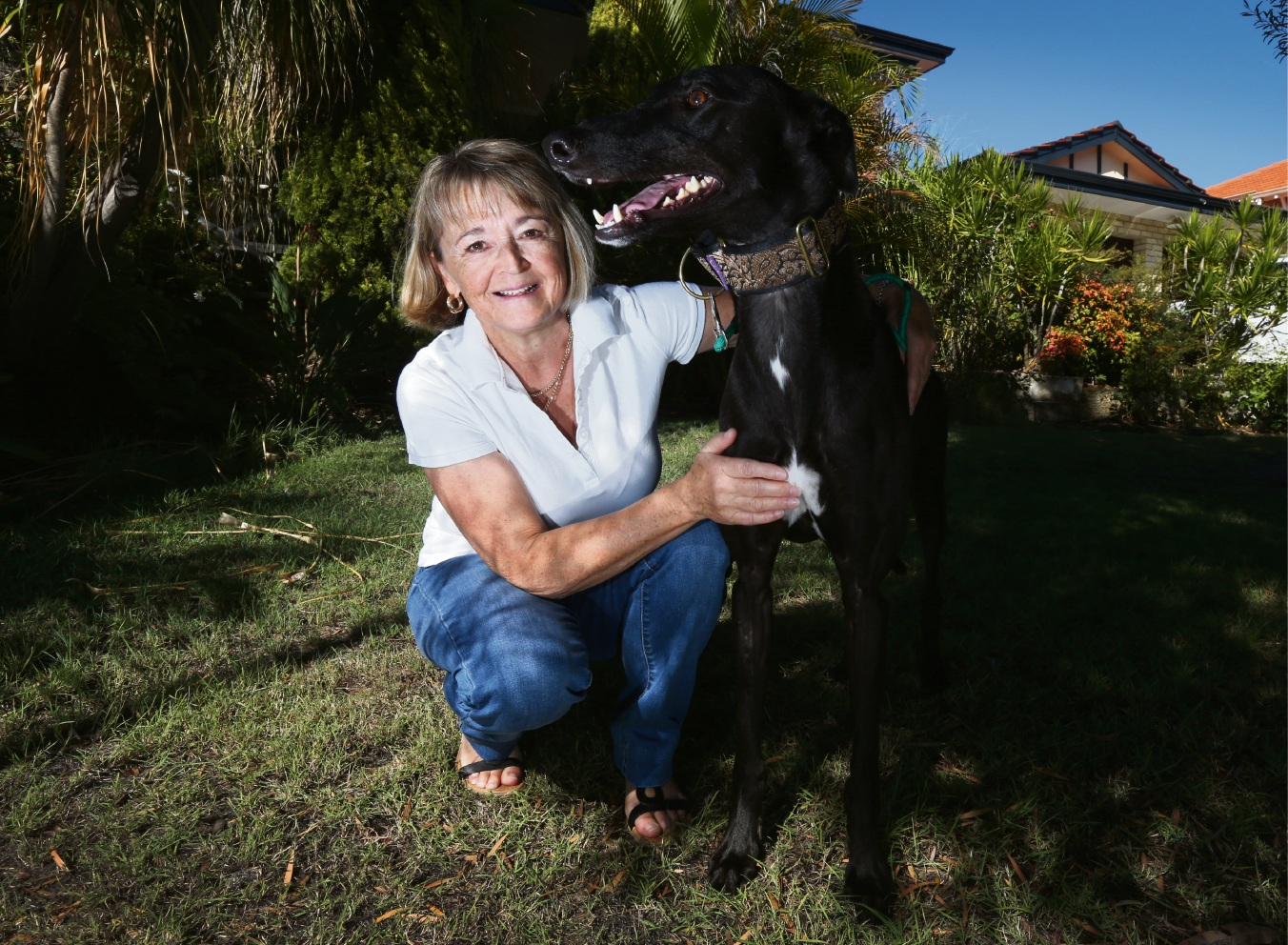 Joan Gillis with her latest foster dog, three-year-old greyhound Jack. Picture: Matt Jelonek