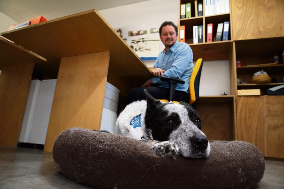 Business as usual: Kai in his usual position at owner Dave Delahunty's office.