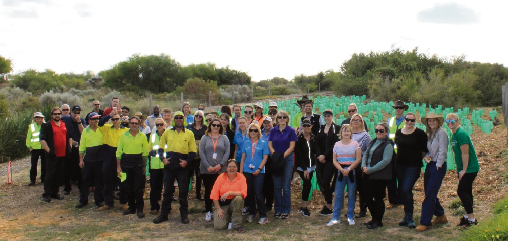 City of Mandurah staff spent a day at the beach planting trees.