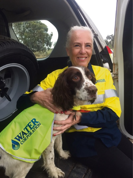 Springer spaniel Tommy with Water Corporation chief executive Sue Murphy.