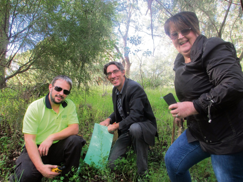 Preservation of unique Grevillea helped by Greening WA and Shire of Murray