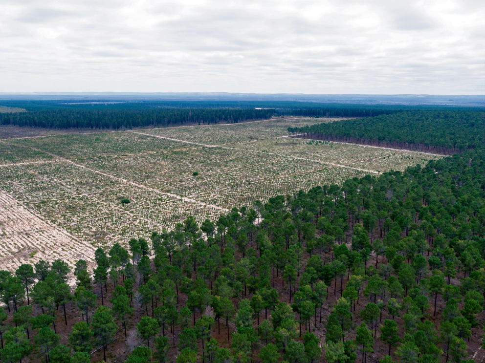 The Pinjar Pine Plantation is being cleared to reduce groundwater consumption. Picture: WWF/Pixel Pilot