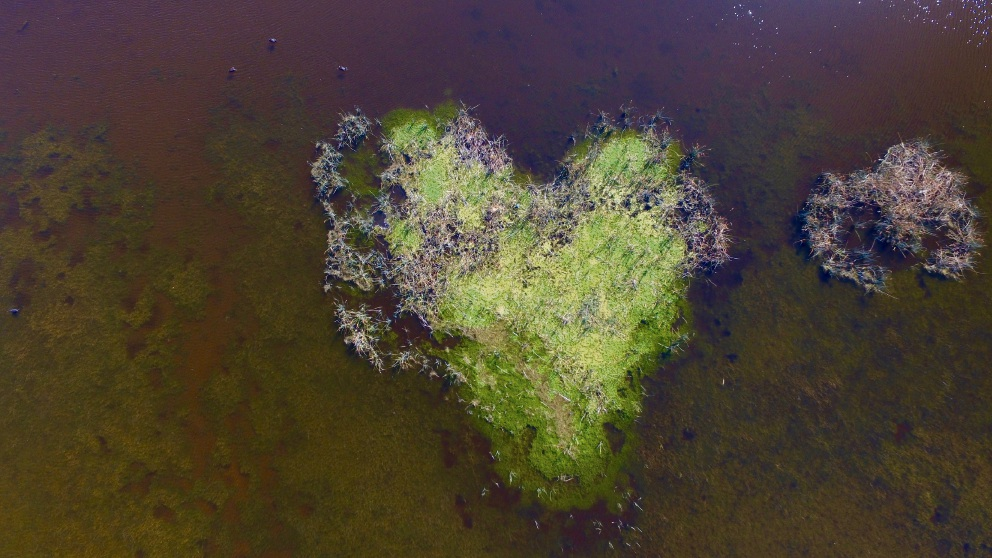 The heart-shaped island at Lake Joondalup. Pictures: Diana Champion