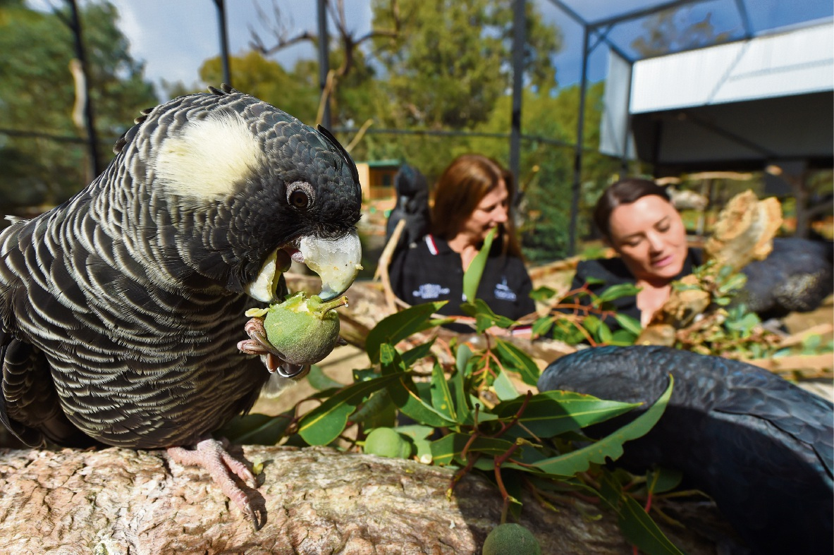 Volunteer Karen Wyatt and P&N bank manager Joy Evans check on the health of the birds. Picture: Jon Hewson  d471894