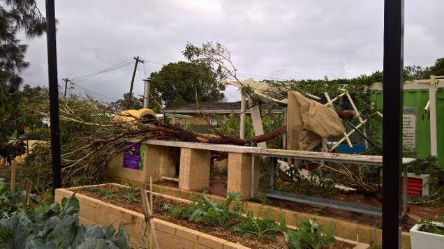 Tuesday's mini tornado left a trail of damage at the Hamersley Habitat Community Garden