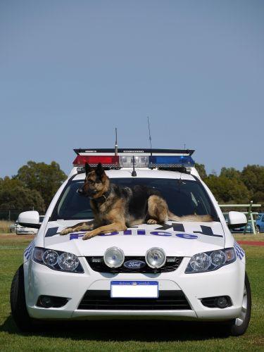 Police dog Bucky.