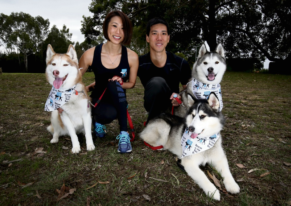 Tracy and Jeremy Chang with dogs Mia, Bella and Odin. Picture: Matt Jelonek www.communitypix.com.au d472180