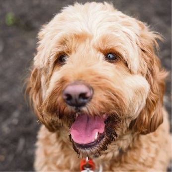 Available for bookings: Spoodle George helps students de-stress.