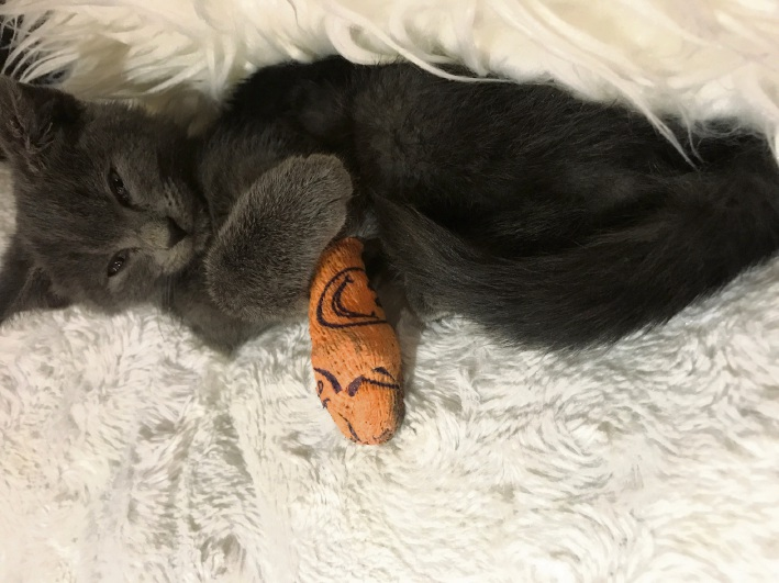 The kitten found on train tracks at Joondalup station.
