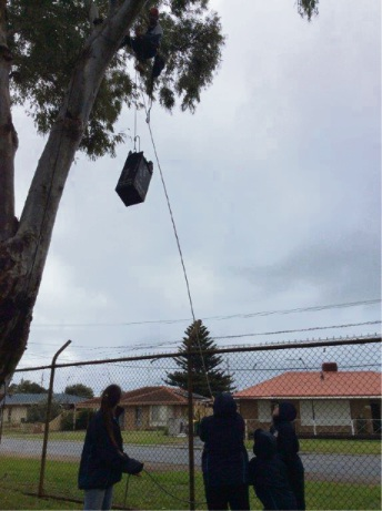 Students assisting installing a nesting box in a tree.