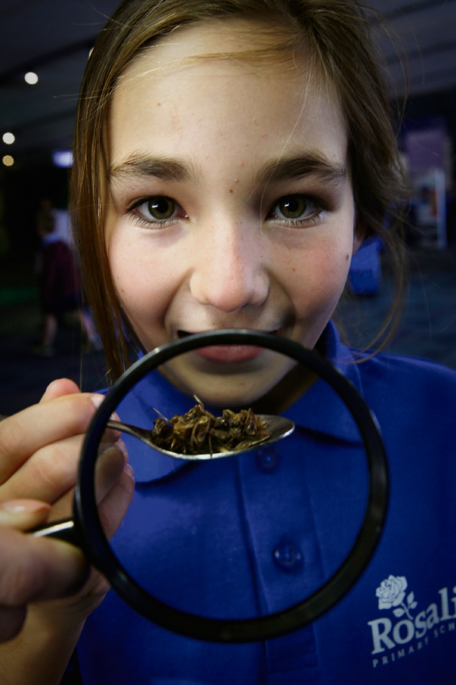Lola Grislain from Roslie Primary with some roasted crickets to taste at Scitech's Future Earth program, which was part of the school's National Science Week activities. Picture: Andrew Ritchie www.communitypix.com.au d472831