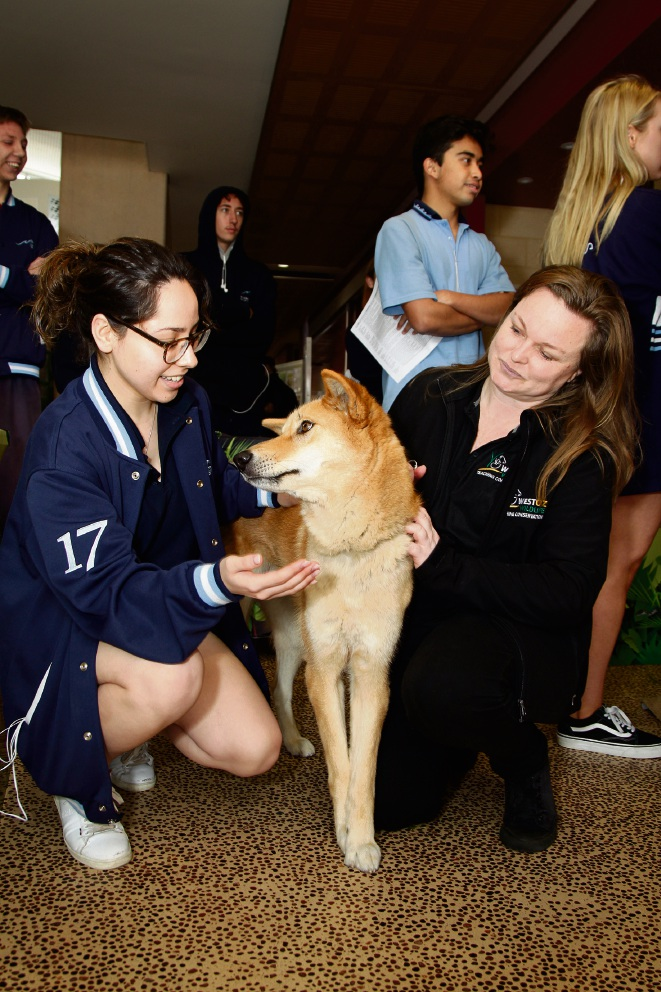 Kendall Pickering from WestOz Wildlife with Dingo Yappa and student Najwa Hassan (18). Picture: Marie Nirme