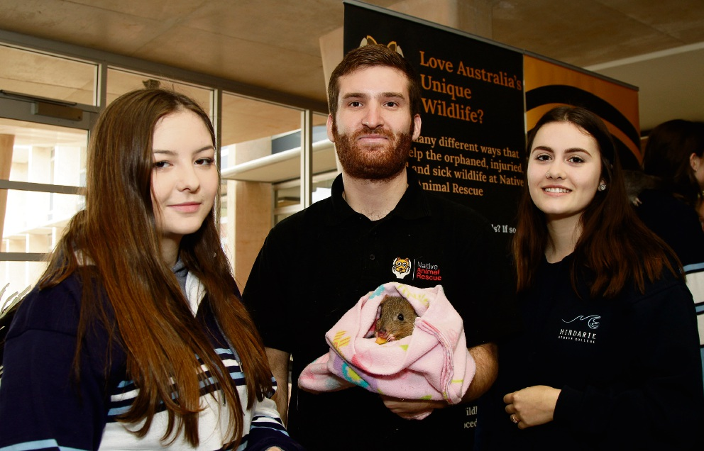 Tom Ferries from Native Animal Rescue holding a Woylie named AJ and talking to students Sarah Jenkinson (17) and Amy Stone (18). Picture: Marie Nirme