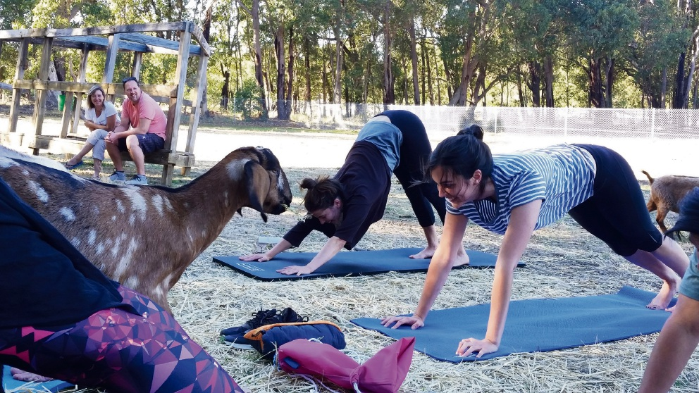 Yoga with goats at Possum Valley Animal Sanctuary. Picture: Supplied