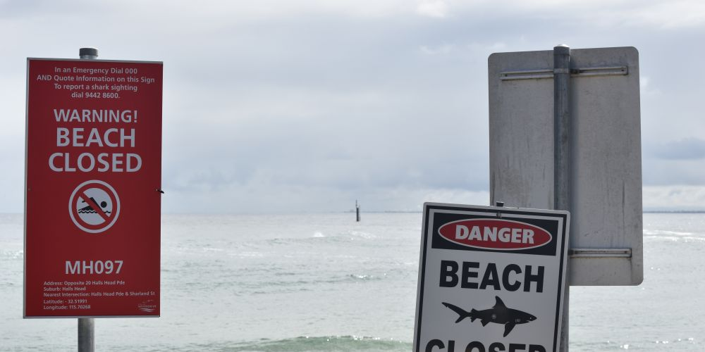City Beach reopened after shark closure