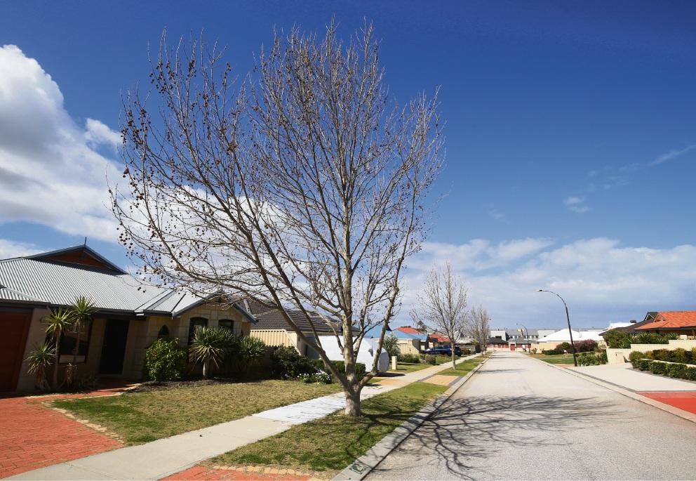 The trees on Peaslake Street in Butler. Picture: Matt Jelonek d472903