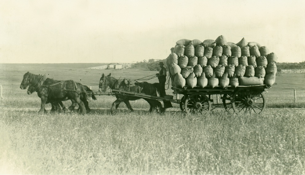 Team of horses carting a dray laden with bags of chaff in 1916 in Beverley.