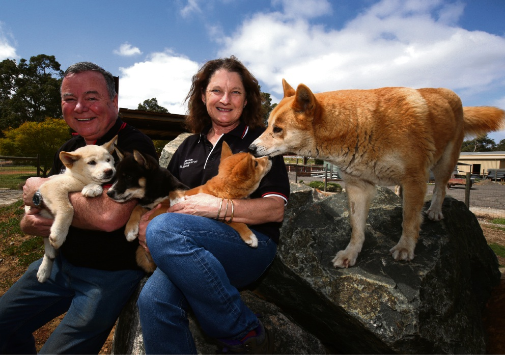 Alan Wheatley and Maureen Youngs with some Bogong dingo puppies. Picture: Matt Jelonek www.communitypix.com.au d474104