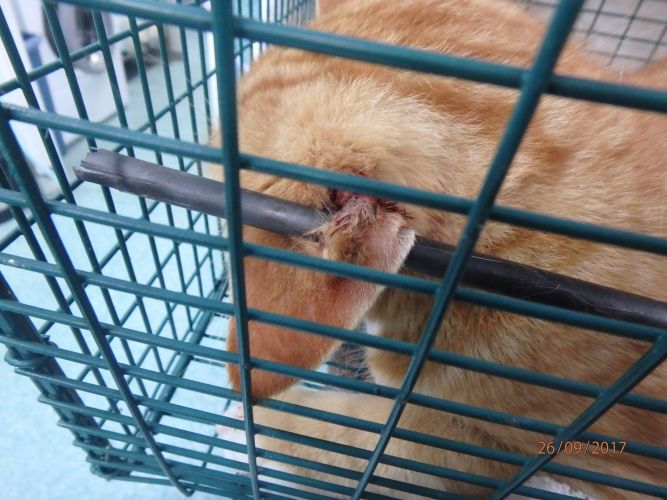 The cat shot with an arrow today in Ellenbrook.