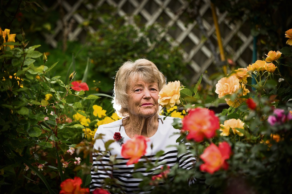 Sandy Beverley with her roses for the Rose Society of WA's upcoming spring show. Picture: Will Russell d474396