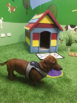 Yappy Days Doggy Daycare has opened in Rockingham.