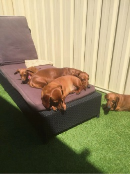 Pampered pooches at Yappy Days Doggy Daycare in Rockingham.