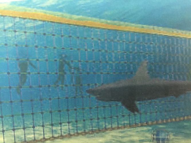 An artist's impression what a shark barrier could look like.