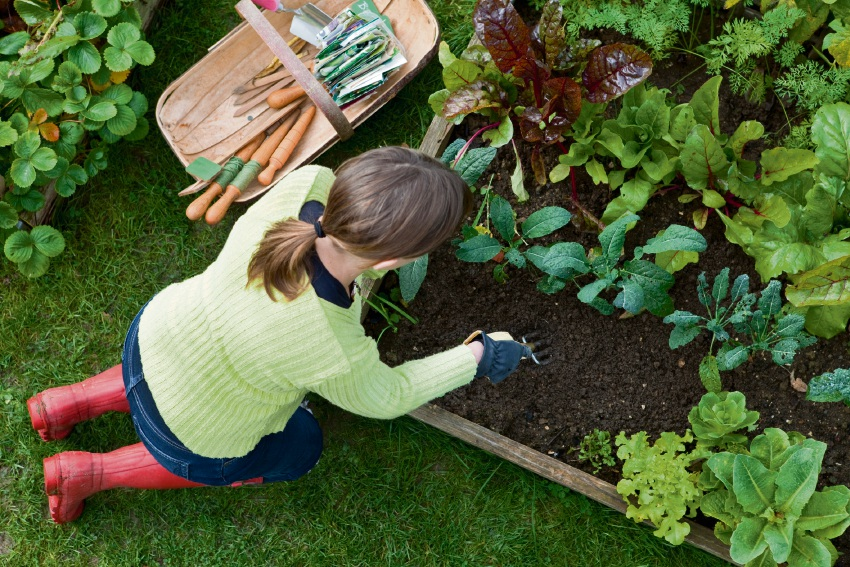 Cultivating a vegie patch is a fruitful way of spending time outside.