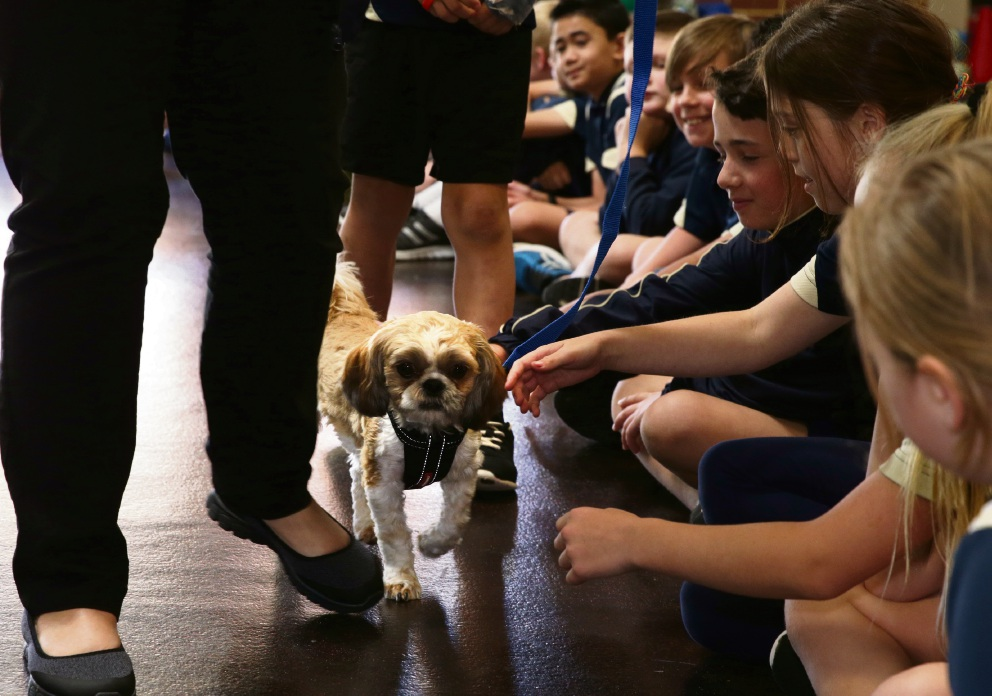 Mental Health Week activities at Clarkson Primary School included an RSPCA visit. Picture: Martin Kennealey d475121 Mogwai doing a meet and greet at Clarkson Primary School. Picture: Martin Kennealey d475121