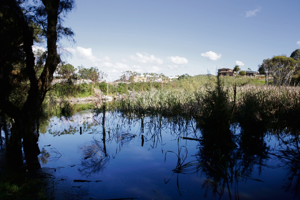 New group to form and work with City of Bayswater to rehabilitate Carter's wetlands
