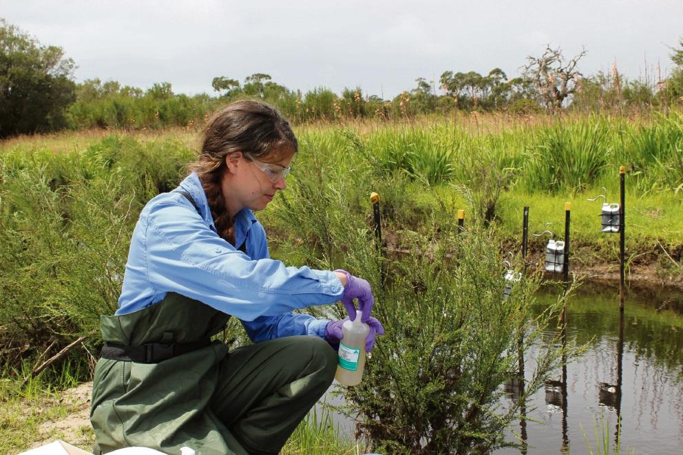 Dr Tulipani takes water samples at Punrak Drain.