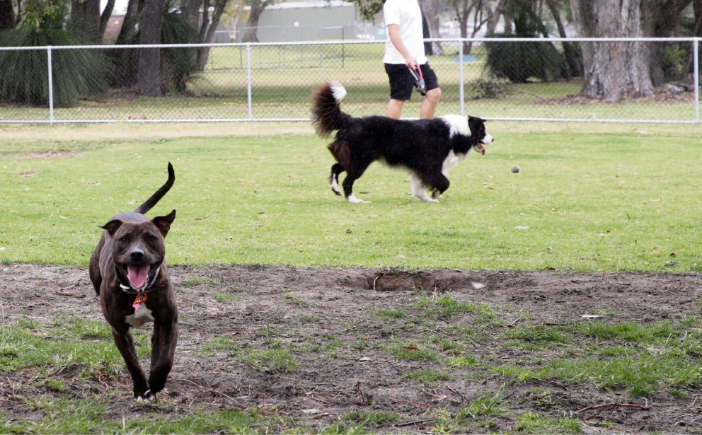 A fence will be built to keep dogs in at Lake Claremont