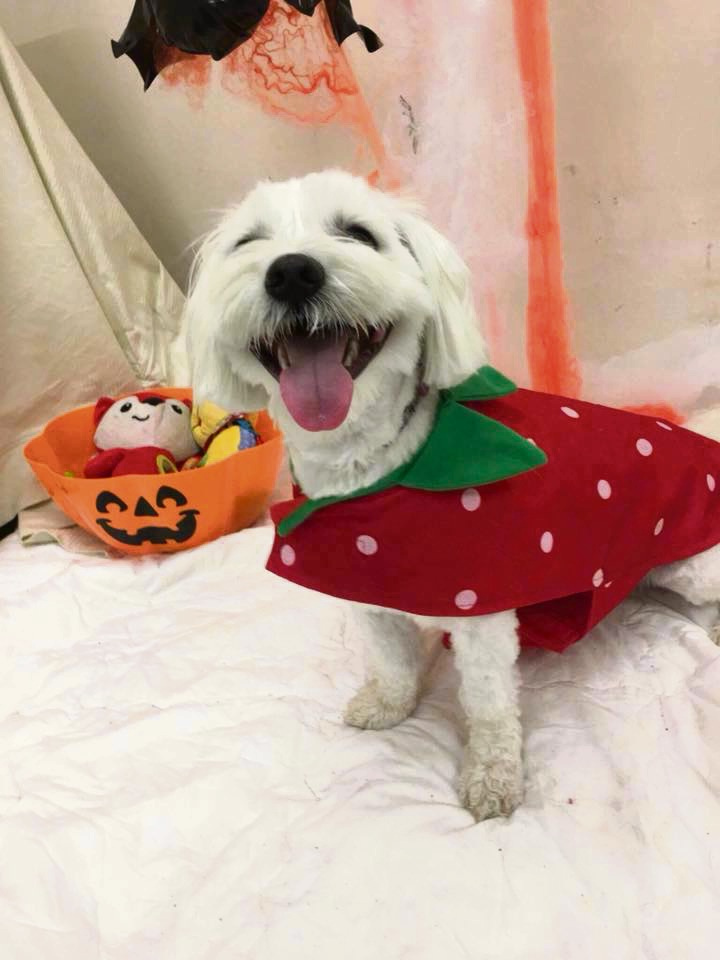 Spooky pups take over Mandurah's doggy daycare