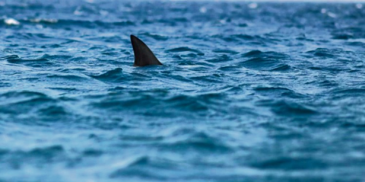 Rockingham: shark spotted off Point Peron