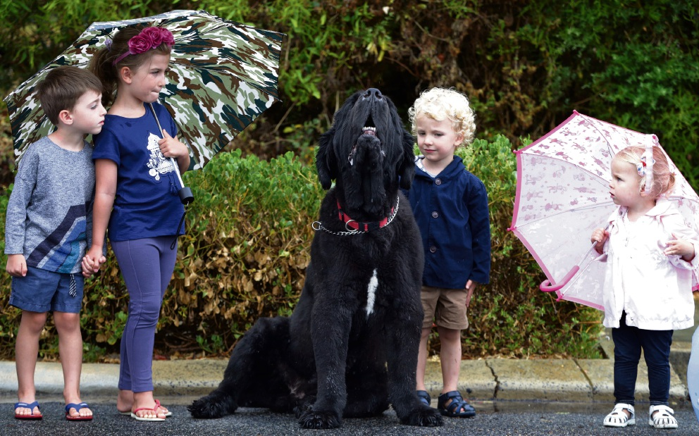 Olivia Dean and her brother Jacob Dean and Jude Rogers and his sister Zara with Ned at a January Dog's Day market. Picture: Martin Kennealey d464756