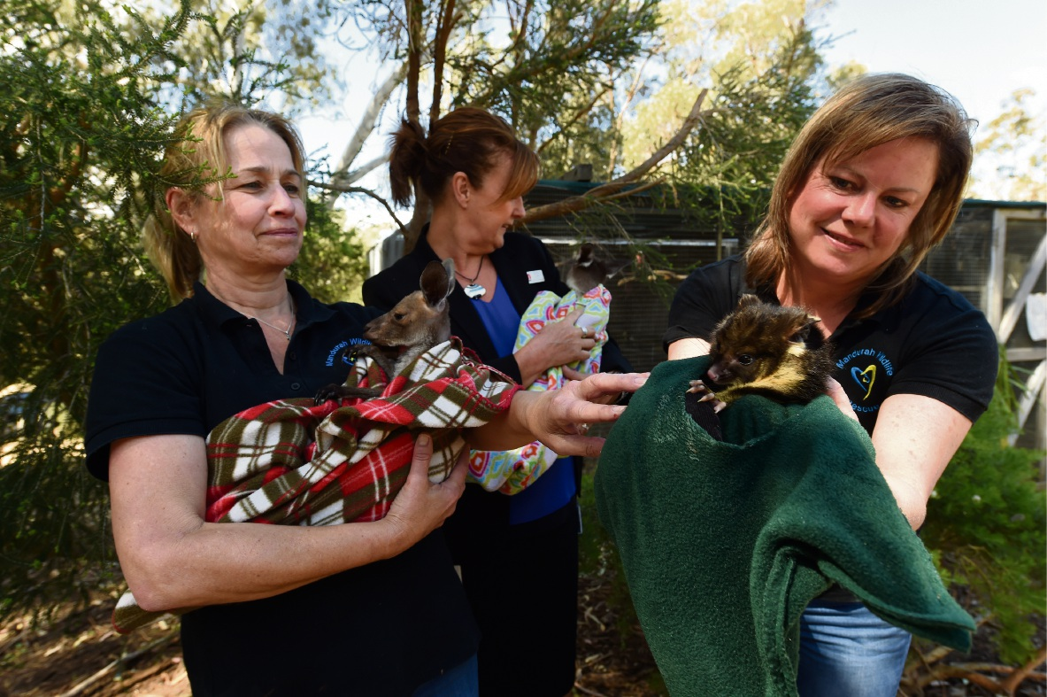 Jenny Norton with Eve, Elaine Carus with Pumpkin and Kim Low with a brushtail possum. Picture: Jon Hewson www.communitypix.com.au   d475159