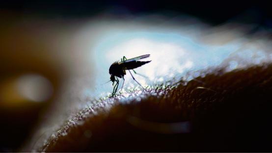 Increase in reported cases of Ross River Virus in Mundaring