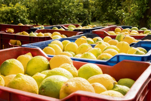 Producers sweet on new Bindoon citrus packing plant