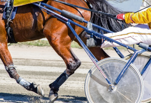 Pacing: Gloucester Park tips, Friday November 10