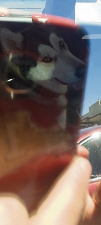 Willetton resident Rach Cook took this picture of a dog left in a car on October 31.