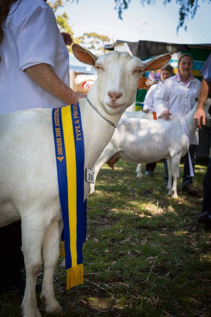 Fun for all at Osborne Park Show