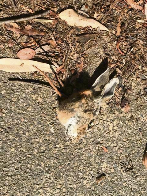 Atwell man makes gruesome discovery of mutilated rabbit's head and dead bird on daily walk