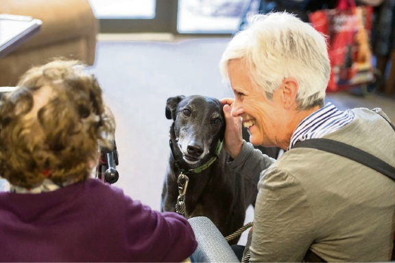 Greyhound Steve is part of a therapy dog program at Regis Greenmount. Picture: Supplied