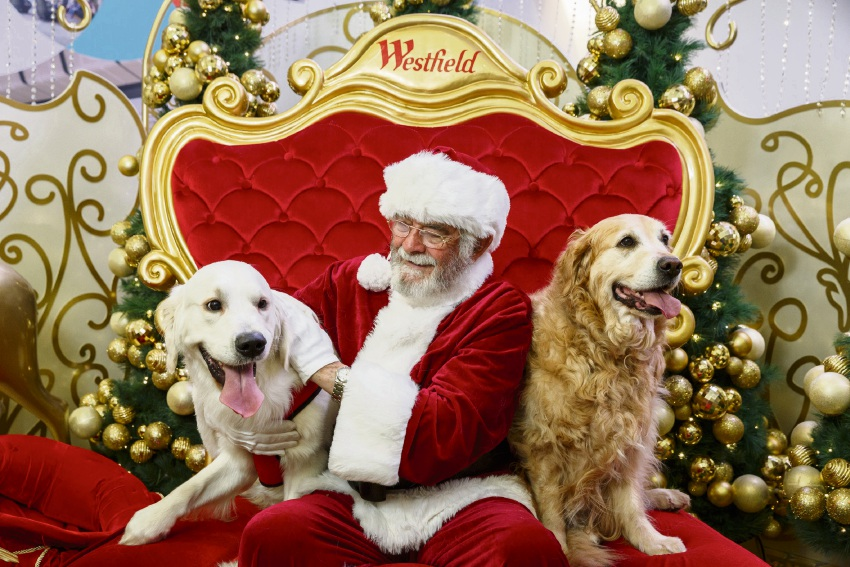Santa Pet Photography is available at Westfield Whitford City. Picture: Glorious Goldens