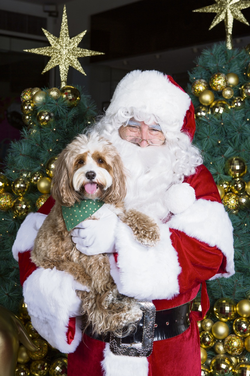 Ho Ho Woof? Whitford City allows you to get a photo with Santa and your 'fur family'