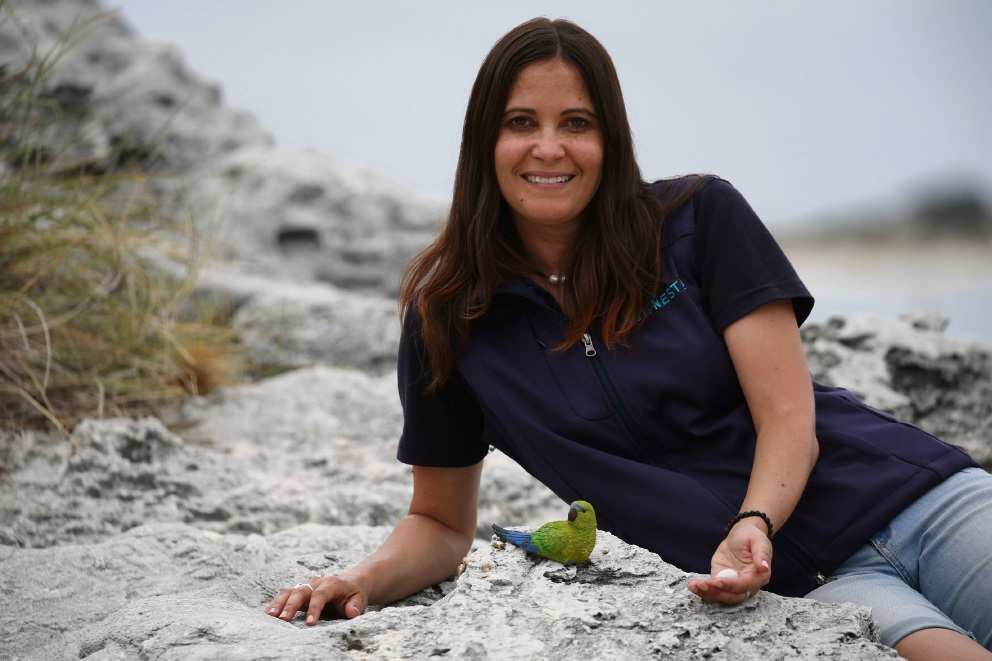 Rottnest Island rock parrot population increases to 16
