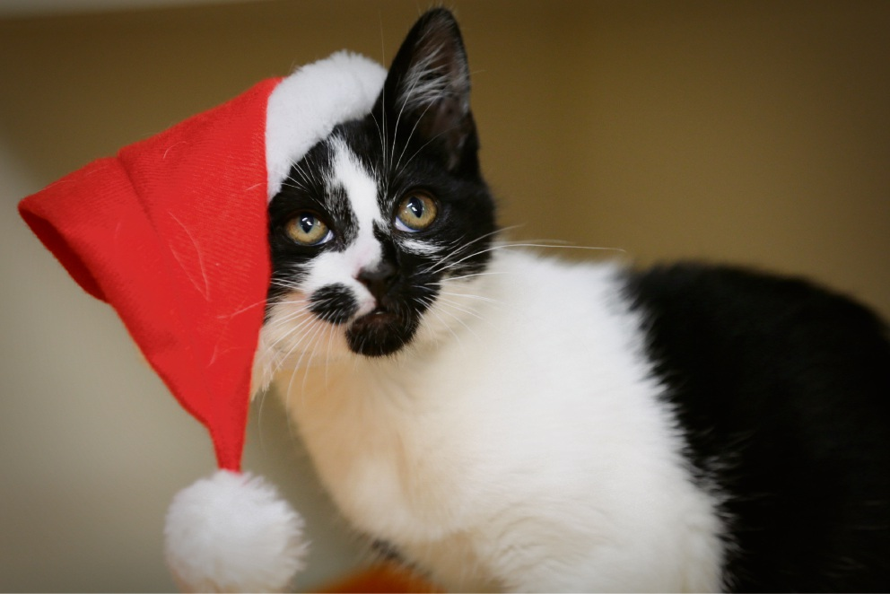 Shenton Park: Cat Haven's Catmas a chance to have a hairy Xmas